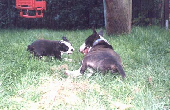Bullie Uri & Boston Gizmo!